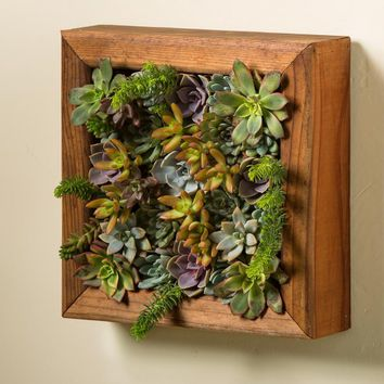 Succulent Garden in a Redwood Frame