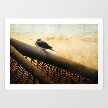 Mourning Dove on Beach Art Print by Elaine C Manley