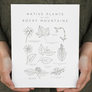 native plants of the rocky mountains print