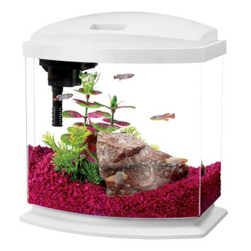 Aqueon mini bow led desktop fish aquarium from gotpetsupplies for Aqueon fish tank
