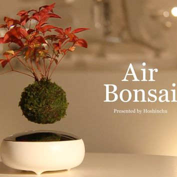 "Air Bonsai | Create your ""little star"""