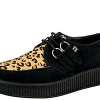 Leopard Creepers