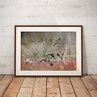 Photo Prints, Canada Geese, Nature Photography Wall Art, Goose Print, Rustic Decor, Flock of Geese, 8x10 Wall Art, 20x30 Farmhouse Decor
