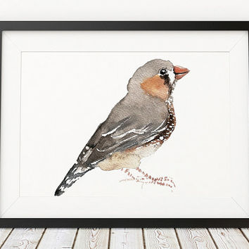 Cute nursery art Zebra finch print Bird watercolor ACW140