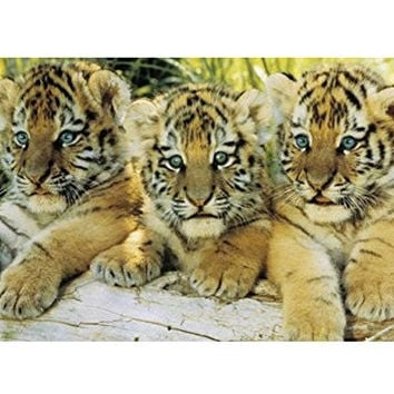 Tiger Cubs Size 24 x 36 Poster