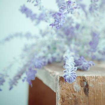 Print - Violet Fog - photography autumn mauve violet botanical wood crate wall home interior decor picture Oht
