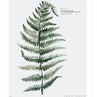 Botanic Urban Plate 1, Fern / medium - Gifts | Ross & Brown online designer home store