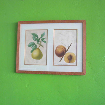 Wood-Framed Botanical Fruit Prints: Detailed, Color Antique Lithographs of Peach, Pear, Northern Spy & New Apple Redleaf; Choose Either/Both