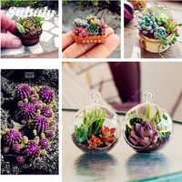 50 Pcs/Bag Succulents, Bonsai Flower Seeds, Potted Plants Purify the Air, Indoor Plants Radiation Protection Bonsai Seeds