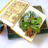 DIY Succulent Centerpiece Vintage Book Planter for the Book & Plant Lover