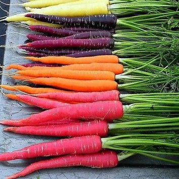 Carrot Rainbow Mix Vegetable Seeds (Daucus carota) 100+Seeds