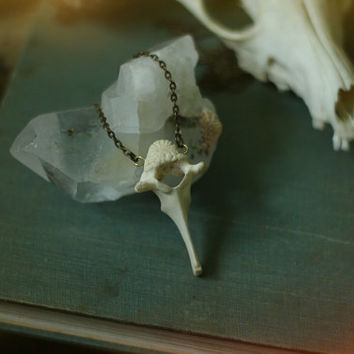 relic // goat vertebrae necklace