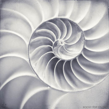 Black & White Photography Print, Nautilus Shell, Spiral Art, Geometric Art, Nature Photography, Golden Ratio, 5x5 8x8 10x10 12x12 or 16x16