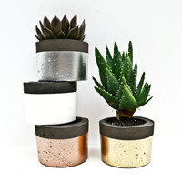 Round 'Pop of Colour' Black Concrete Planters, Various Colours Available