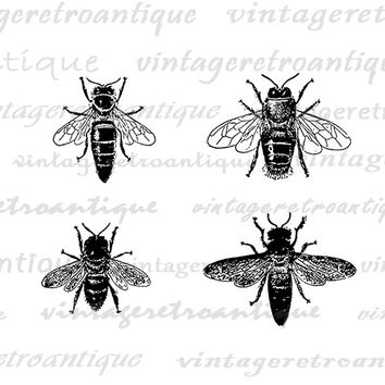 Printable Bees Graphic Bee Collage Sheet Image Bees Digital Illustration Insect Bug Antique Clip Art Download Jpg Png Eps HQ 300dpi No.3116