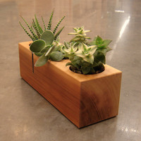 Wood Succulent Planter in Recycled Cedar