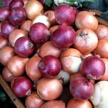 50pcs onion seeds mixed natural NO GMO organic vegetables seeds heirloom plant for home garden supplies yellow purple 2018 HOT