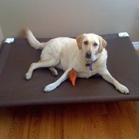 Large Canvas Dog Bed. Raised Dog Pet Cot. Use Indoors Or Outdoors 44x44x10 High Sewing Warranty 12 Marine Canvas Colors