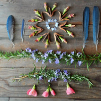 """Nature collection, flowers nature photography still life photograph green rosemary herbs dark brown wood rustic wall art  """"Collection Five"""""""