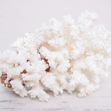 Beautiful Bright White Large Sized Piece of Brown Stem Coral, Very Chic