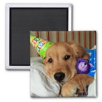 Golden Retriever Birthday Magnet