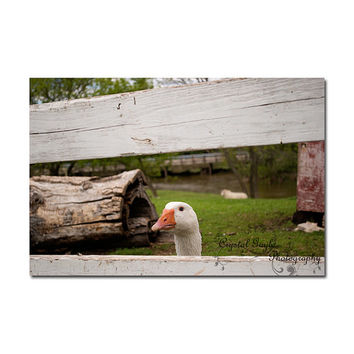 Goose Print Animal Photography Farmyard Animals Farmhouse Decor Rustic Home Decor Greeting Card Reusable Monthly Calendar