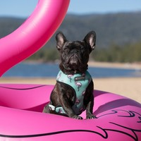 Frenchie Reversible Harness - BEVERLY PALMS