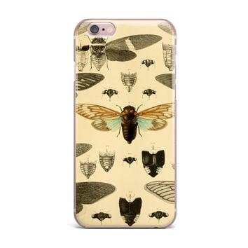 "Suzanne Carter ""Vintage Cicada"" Bugs Pattern iPhone Case"