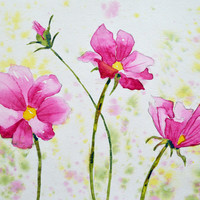 Art, Fine Art Watercolor of Pink Cosmos Flowers