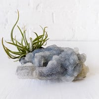 10% SALE Air Plant Crystal Garden Chalcedony India Mineral with Air Plant Fuzzy Clump