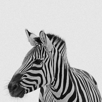 Zebra Print, Nursery Animal Wall Art, Cute Funny Zebra, Black and White Nursery Decor, Safari African Animal Print, Nursery Poster *60*
