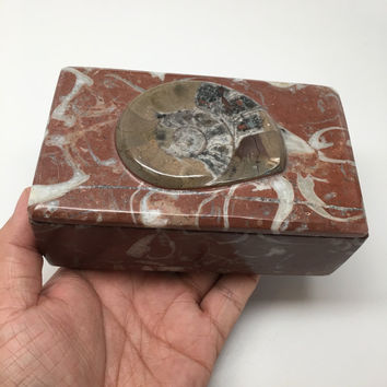 "656g, 5""x3""x2"" Rectangular Fossils Ammonite Red Jewelry Box @Morocco, MF650"