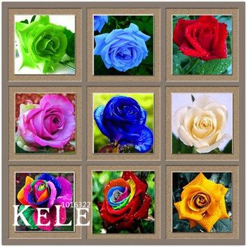Loss Promotion!Flower pots planters ,20 Kinds Of 50 Seeds, Rainbow rose seeds Beautiful rose seed Bonsai plants Seeds,#S69N7C
