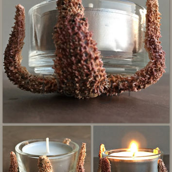 Starfish Decor/ Starfish Tealight Candle Holder/ Nautical Mini Vase/ Beach Decor/ Coastal Decor/ Ocean Decor/ Natural Home Decor