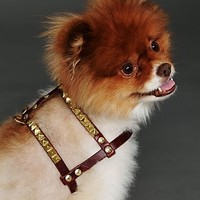 Paco Womens Nix Studded Harness