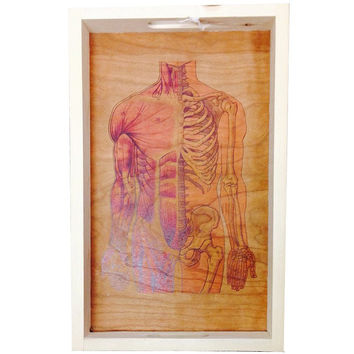 Anatomy Wood Tray