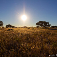 Sunset Over The Plains - Nature Photography, Landscape Photography, Sunset, Yellow Fields
