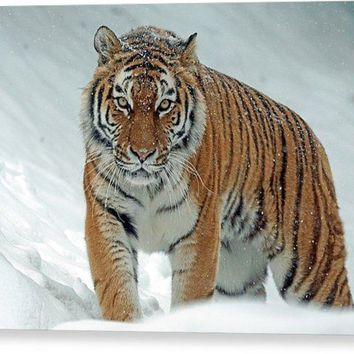 Tiger In Winter Photo Art Print