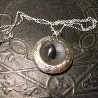 Taxidermy Grey Shark Silver Glass Eye Locket