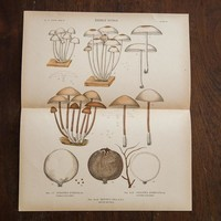 Large Edible Mushrooms Fungi Plate 84