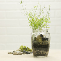 Fern Terrarium Kit