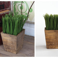 Graceful Grass in Wood Container