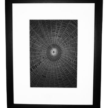 Real Spider Web Created by the Orchard Spider Matted or Framed
