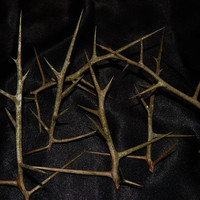 Black Locust Thorns, SET OF THREE - Large 6-8 Inch Size - Use with Hex and Torture Voodoo Poppets - Black Magick - Voodoo Doll Thorns