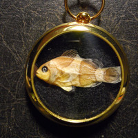 Nemo Found Clown Fish Taxidermy Specimen Pocket Watch Ossuary