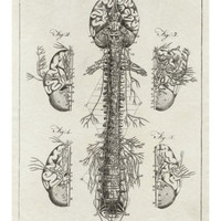 Brain and Spinal Column Giclee Print by A. Bell at AllPosters.com