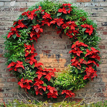 Christmas Print, holiday decor, Christmas wreath, red and green, 8x10 photo