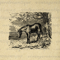 Antique Horse Digital Image Download Printable Graphic Vintage Clip Art for Transfers Printing etc No.2306