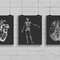 Anatomy Art Print Set - Anatomy Decor - Office Decor - Dorm Decor  - Set of 3