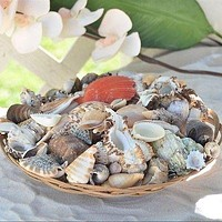 "Sea Shells Natural Shells Beach Luau Party Home Decor 10"" Weave Basket Nautical"